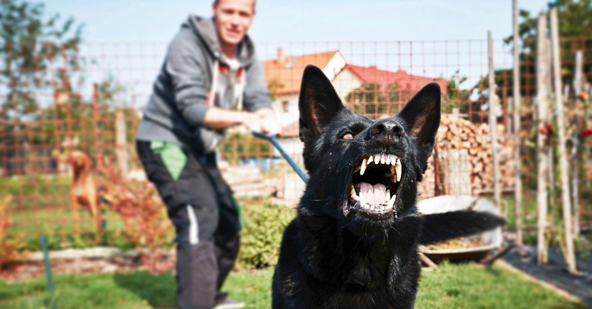 cane che ringhia