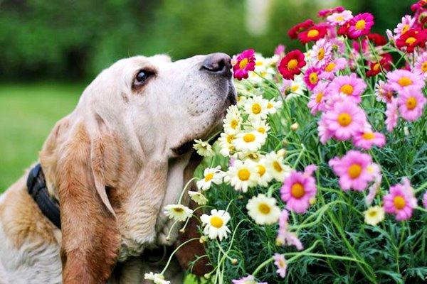 cane che annusa i fiori