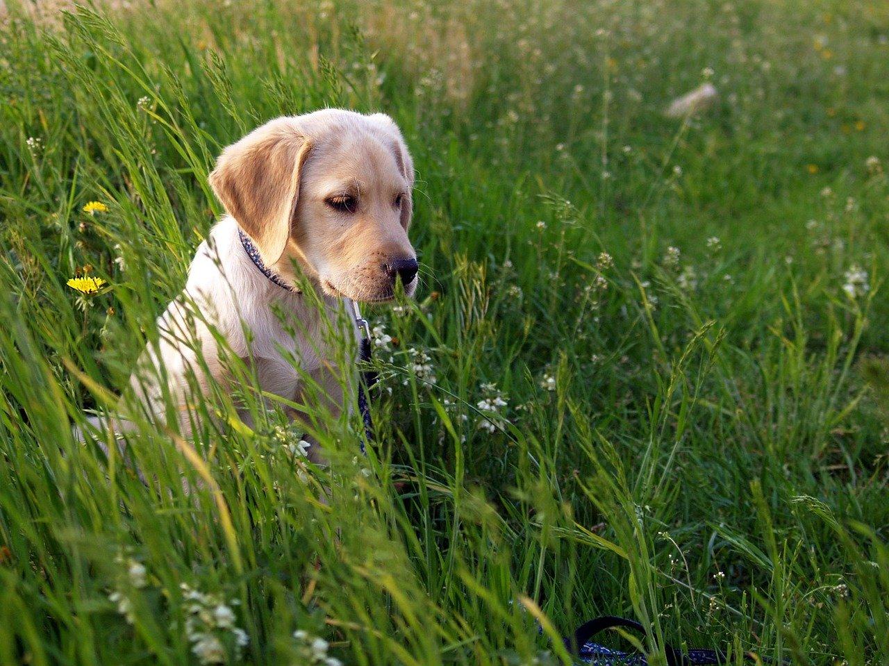 cane incuriosito da qualcosa