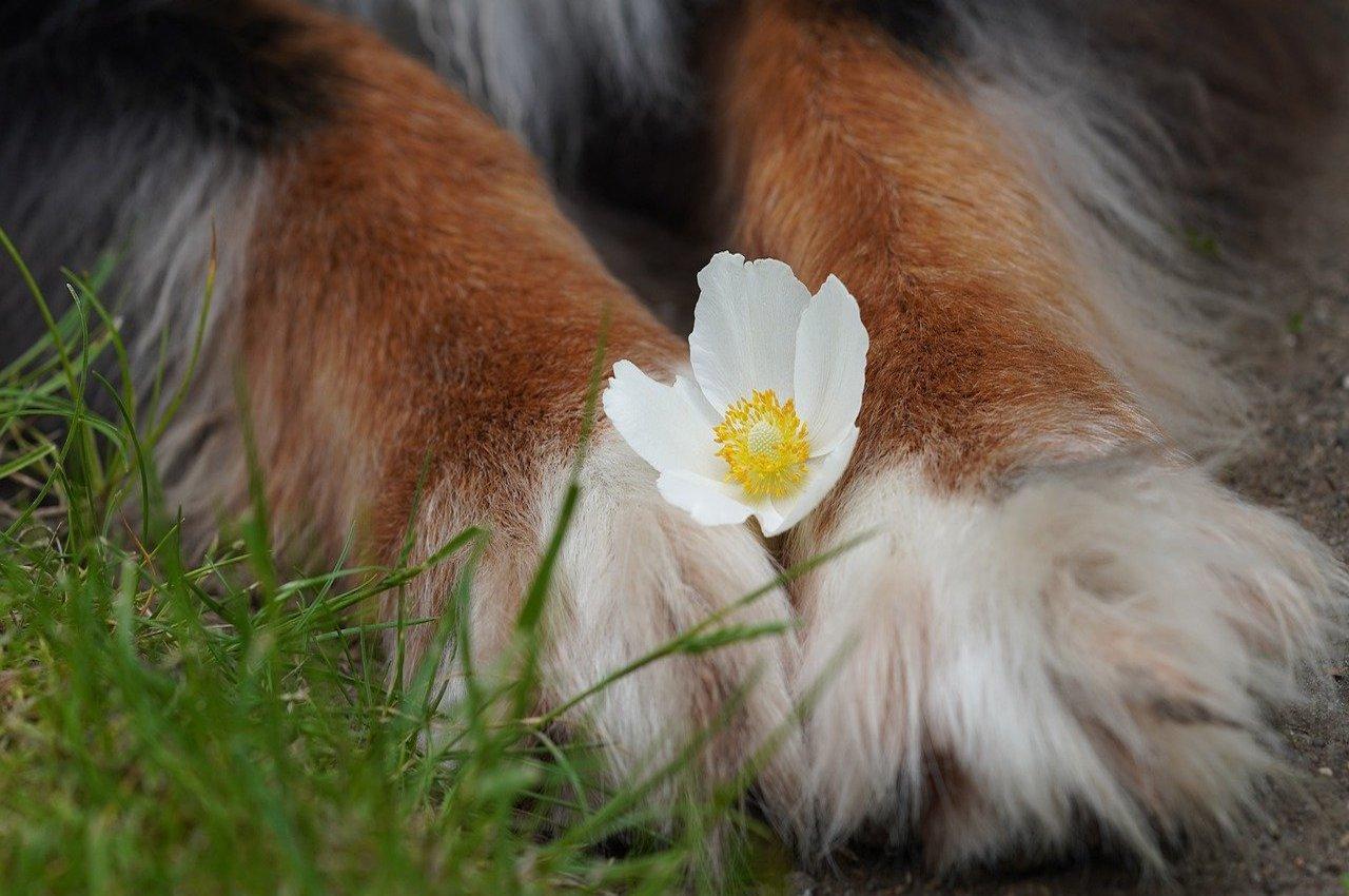 zampe cane e fiorellino