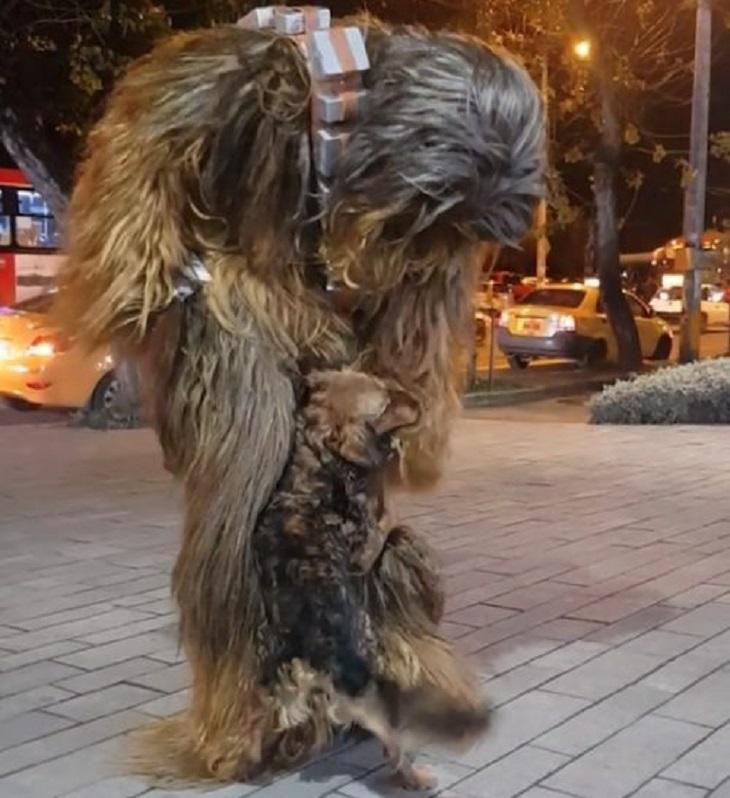 chewbecca-costume