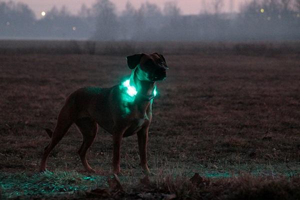 cani capiscono la differenza tra giorno e notte