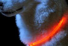 cane con collare catarifrangente