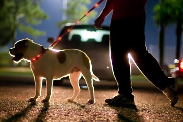 passeggiata notturna con cane
