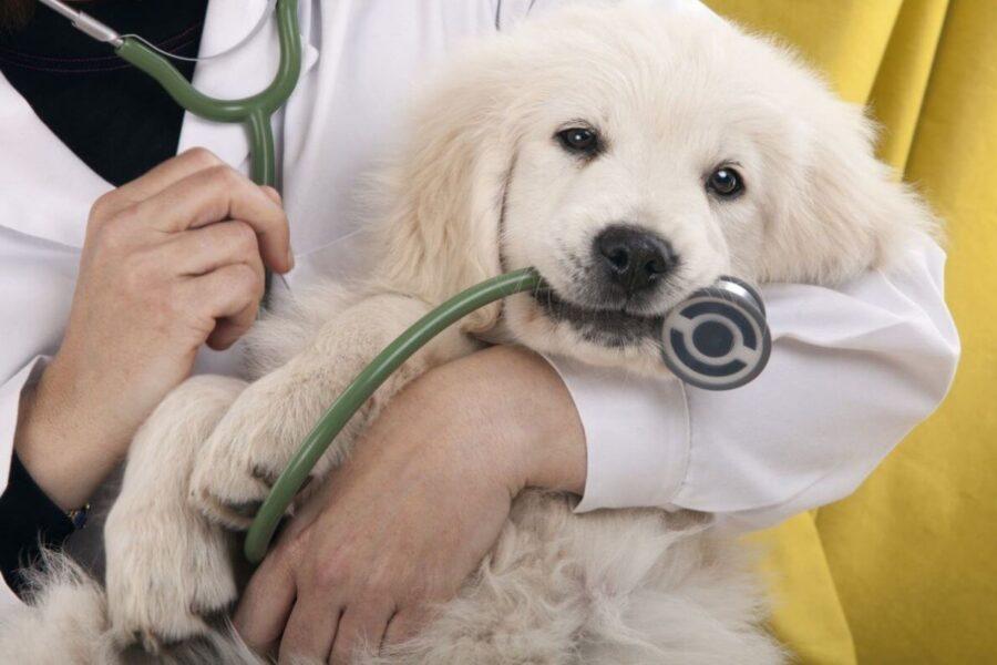 cane con stetoscopio fra i denti