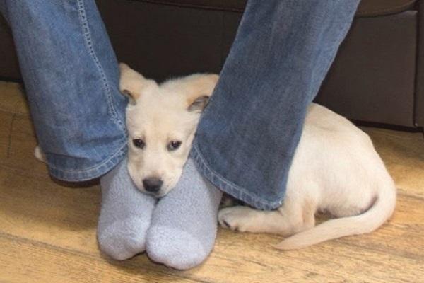 cane tra le gambe