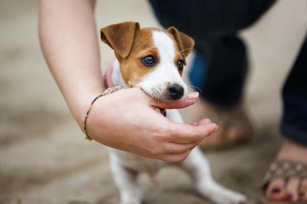 cucciolo di cane mordicchia mano