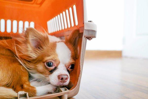 cane nel trasportino