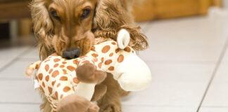 Giochi brevi con il cane: passatempi da 15 minuti per divertirsi in due