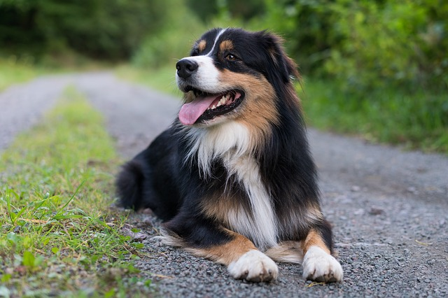 Come insegnare al cane a strisciare, velocemente