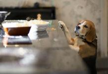 cane sulla tavola