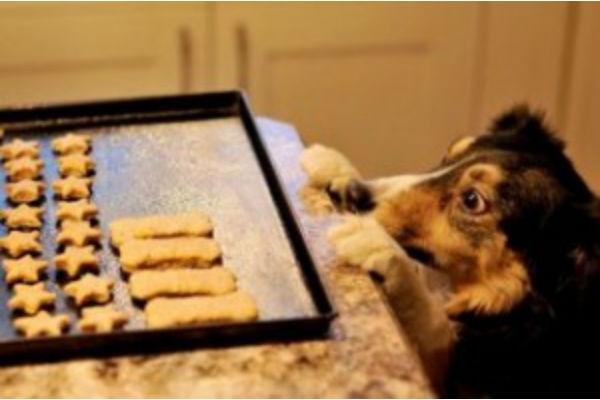 Dolcetti integrali al burro d'arachidi per cani, come farli in pochi passi