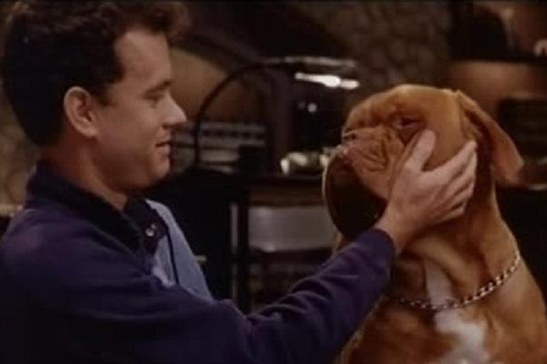 tom hanks con cane dogue de bordeaux