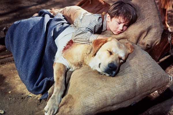 film zanna gialla con cane