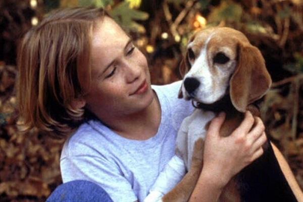shiloh cane e ragazzo