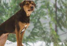 scena film con cane