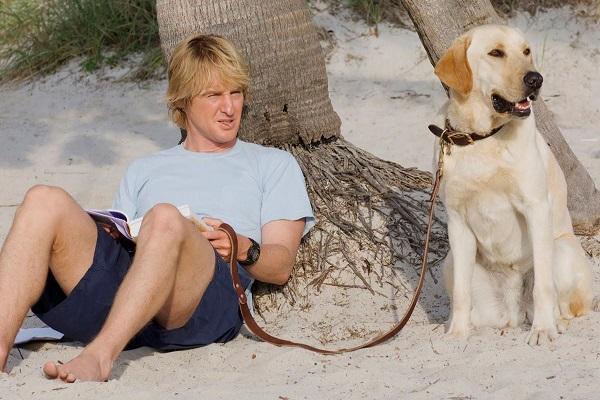 cane labrador di io e marley