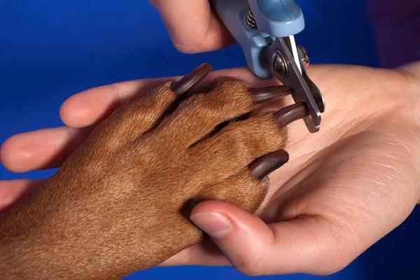 come tagliare unghie cani