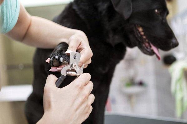 cane che si fa tagliare le unghie