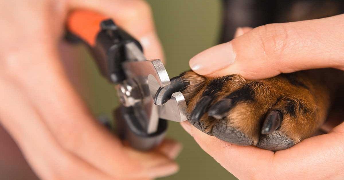 tagliare le unghie al cane