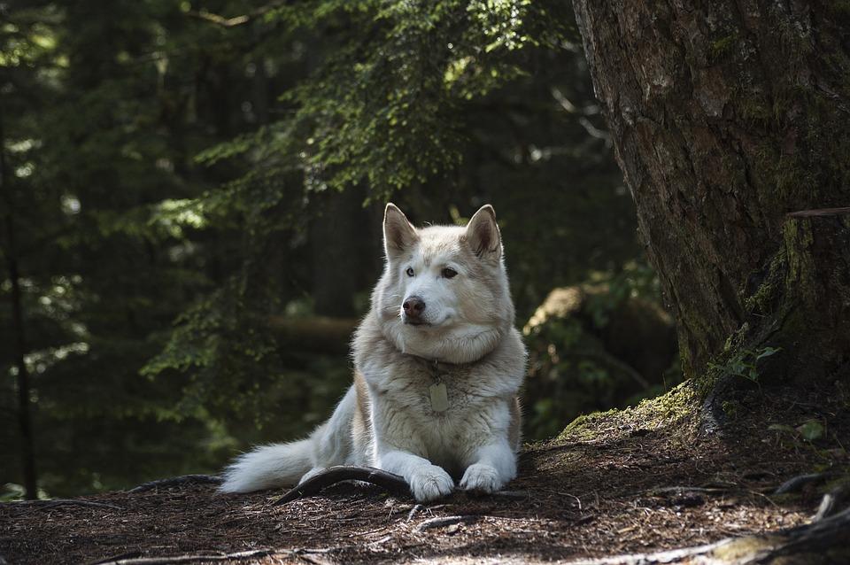 Come insegnare a un cane a non mangiare la terra
