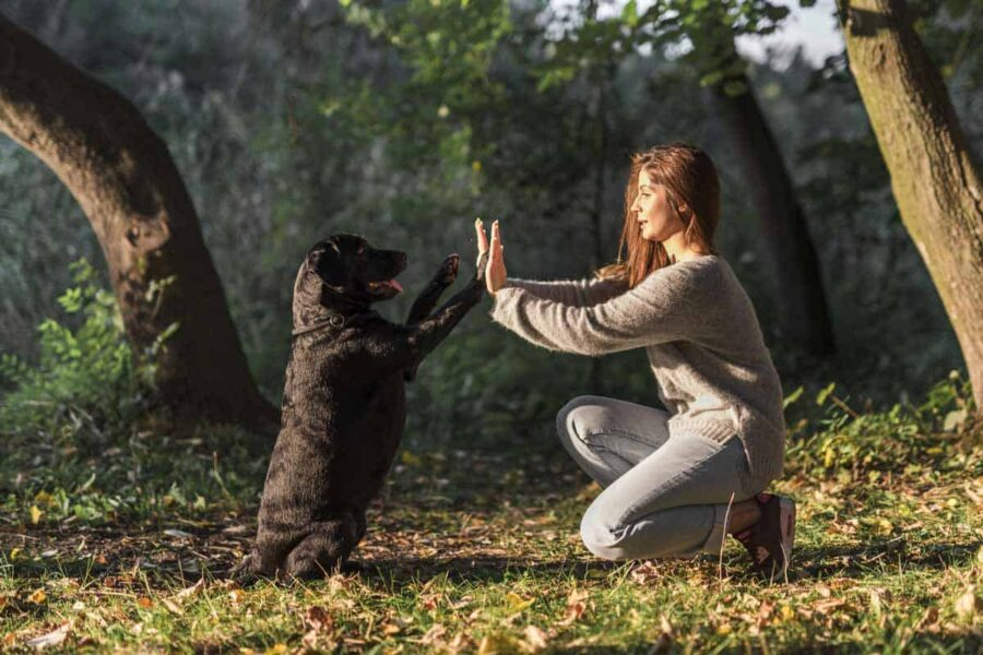 complicità fra cane e ragazza