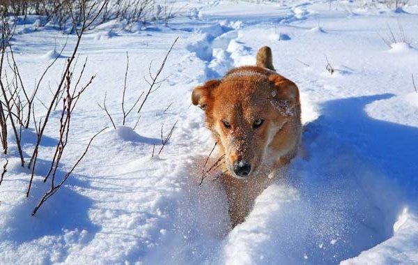 6 giochi che puoi fare con il cane sulla neve