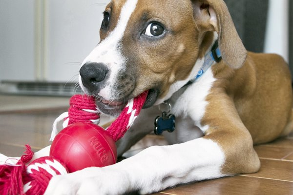 Giochi per il cane quando piove: quali sono?