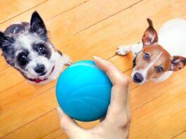 cani giocano con la pallina
