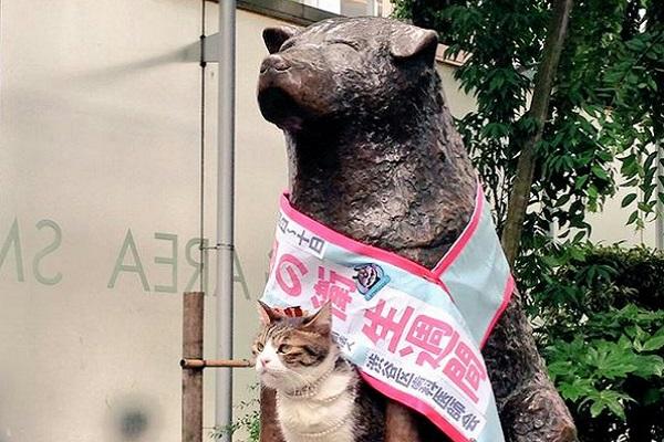 gatto sotto statua cane hachiko