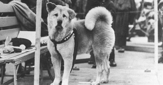 hachiko cane davanti a stazione