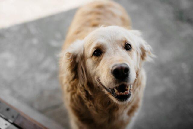 cane bianco guarda in alto