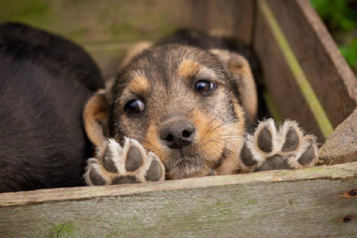 cucciolo di cane nascosto