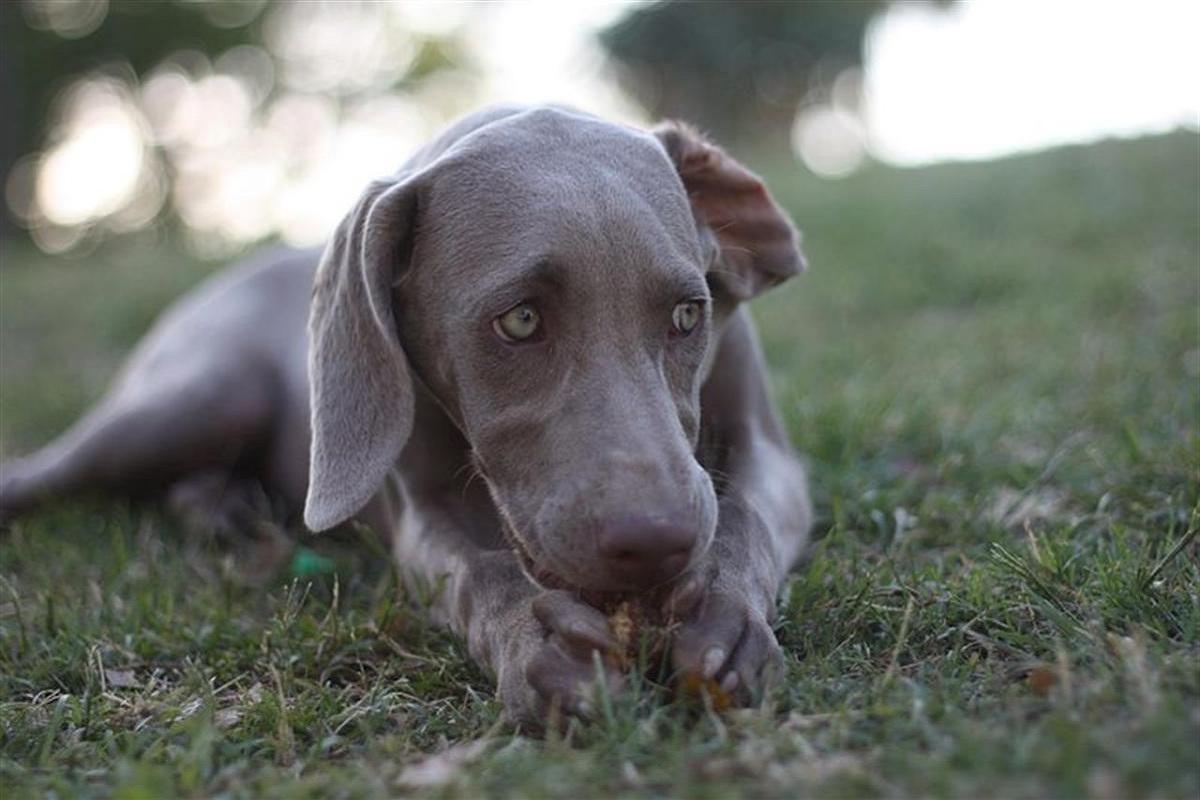 cane ha timore