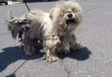 il-cane-era-estremamente-aggressivo-i-raggi-x-spiegarono-il-perche