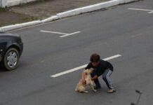 il-cane-investito-e-stato-salvato-da-un-bambino-corso-per-strada