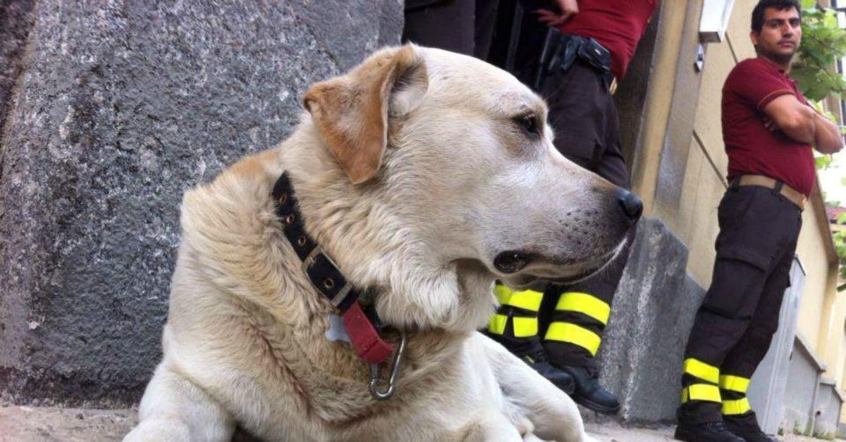 cani possono sentire gli allarmi antincendio