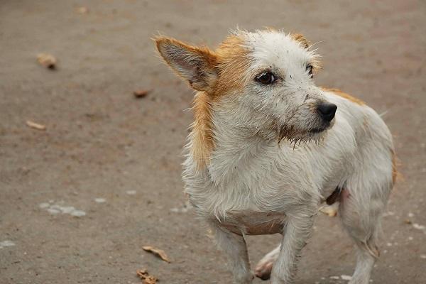 cane che fa i bisogni
