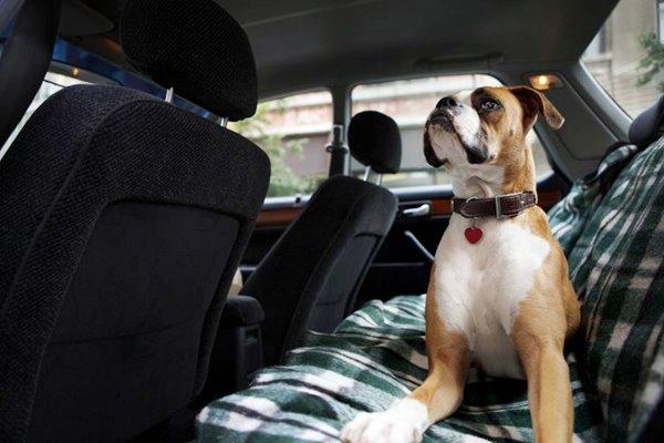 cane seduto sul sedile posteriore