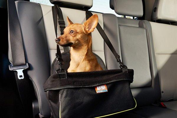 accessori per cani in macchina