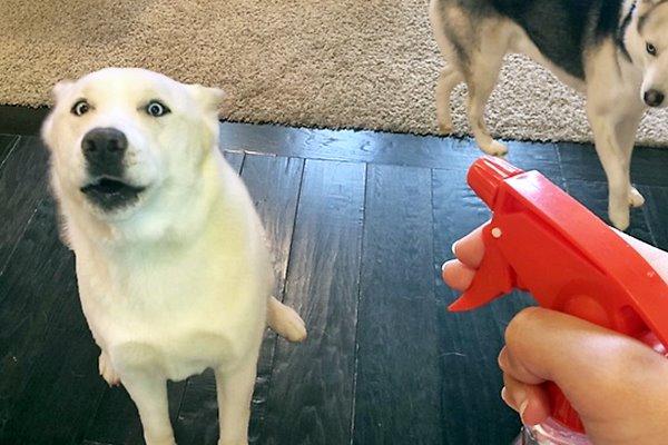 spray per il cane