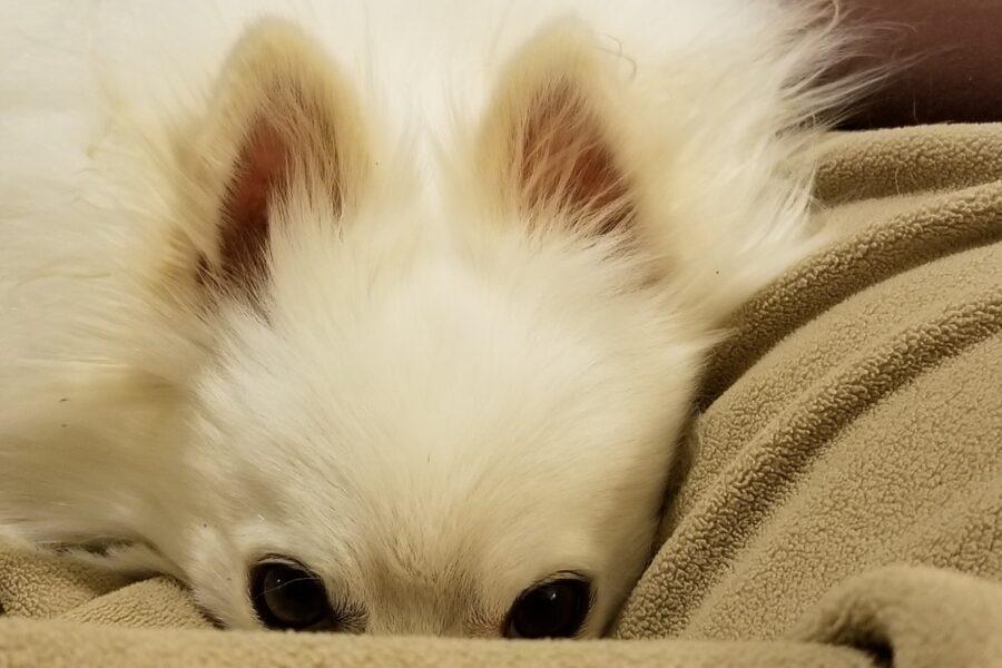 cane con il muso nascosto