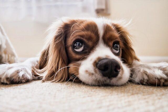 cane intimorito da qualcuno