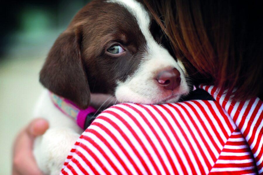 cucciolo di cane che guarda con circospezione