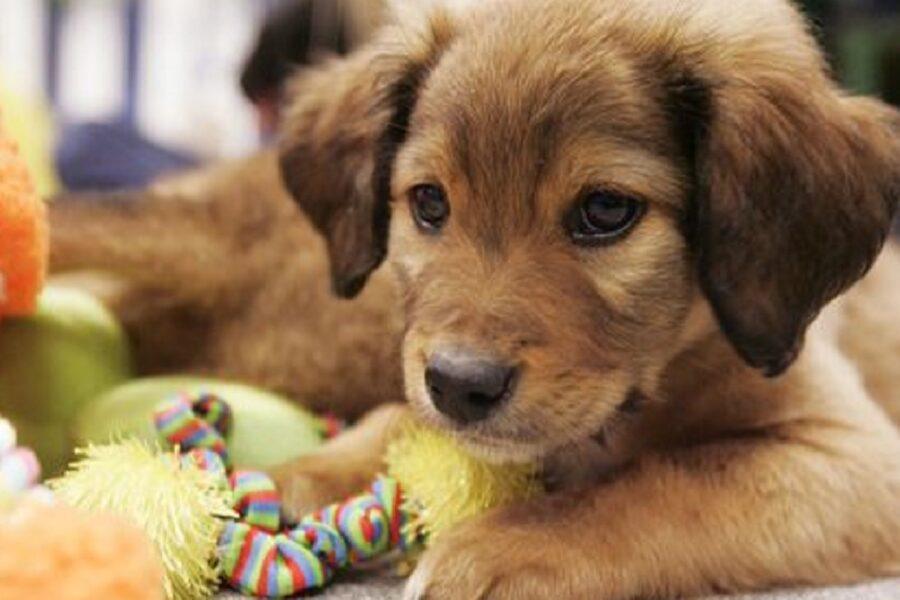 cane con il suo gioco preferito