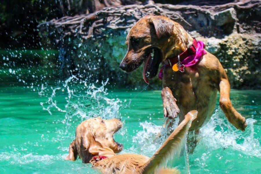 cani si divertono in piscina
