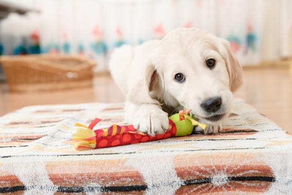 giocattoli per il cane