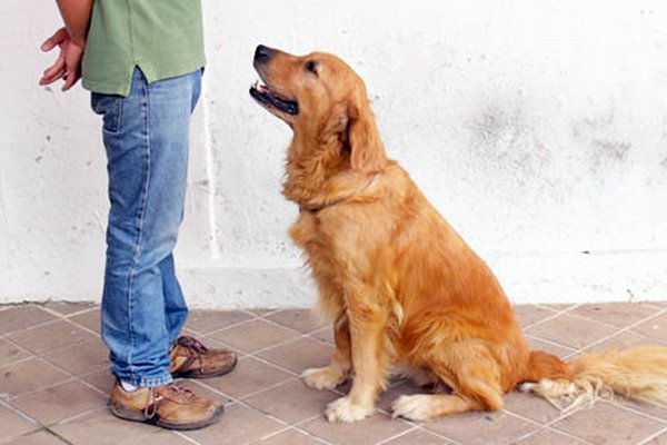comandi di base per il cane