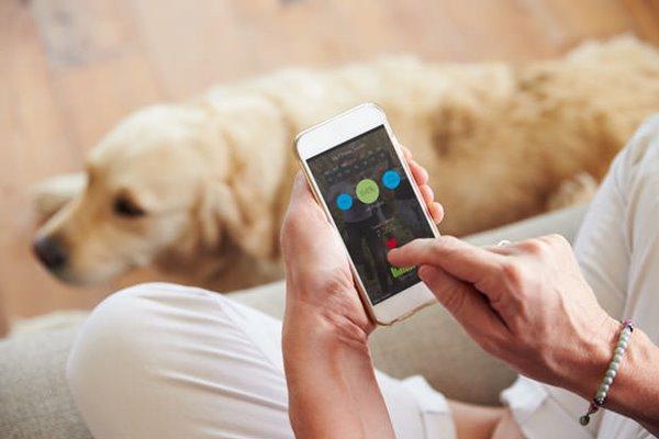 cani e smartphone