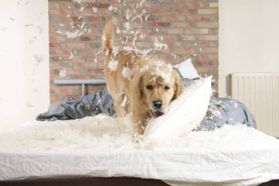cane gioca sul letto